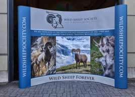 Wild Sheep Society Backdrop